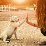 Benefits Of Adopting A Dog